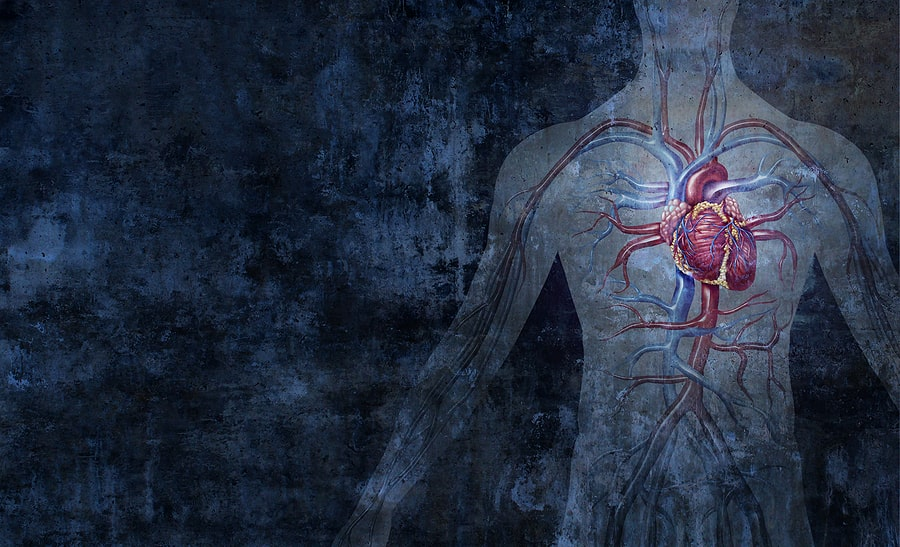 circulatory system west florida vein center dr mark zuzga d.o.