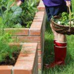 varicose veins dietary choices west Florida veins